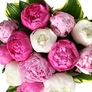 Pink and White Peonies Bouquet