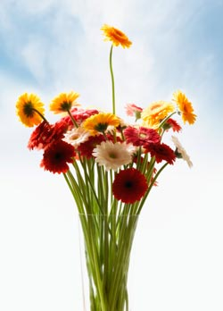 Flowers - Emotional Benefits in Vase