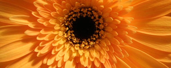 Halloween Party Ideas - Orange Gerbera
