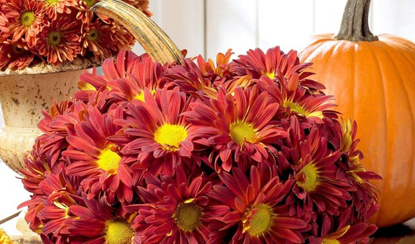 Chrysanthemums in Pumpkin Vase